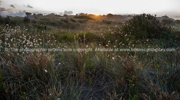 Beach dunes. East Coast. New Zealand Images.