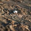 Broken birds egg