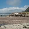 Horses, Te Araroa beachfront. New Zealand images.