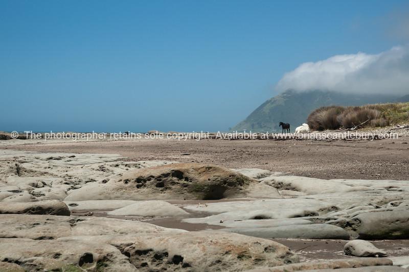 Horses along the Te Araroa coastline, East Coast
