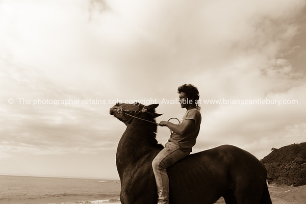 Riding horses on East Coast. New Zealand images.