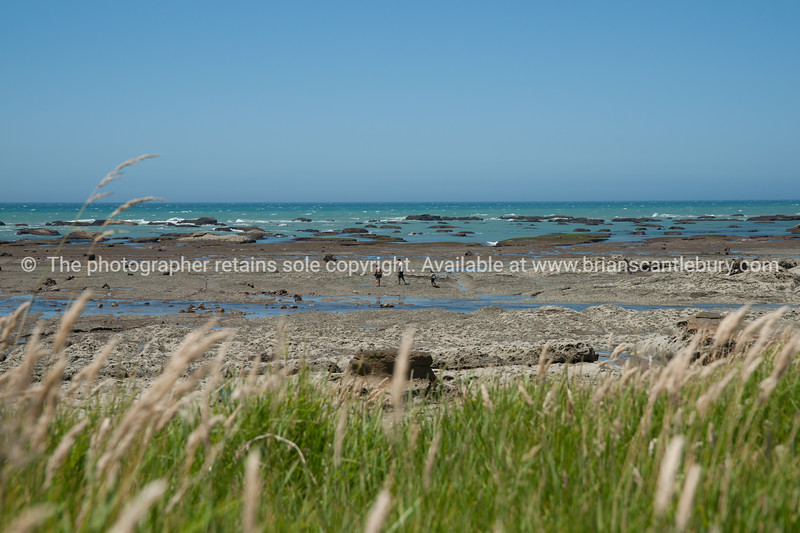 Coastal landscape, beach and foreshore beyond spring grass