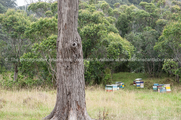 Beehives on edge of forest.