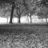 Black and white, Fallen leaves.
