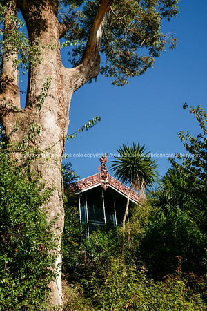 Wharenui under tree