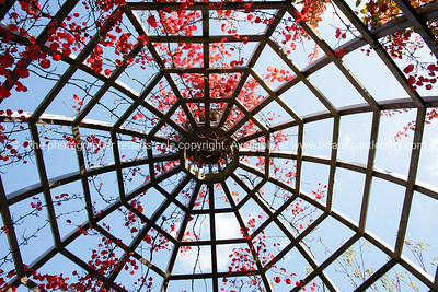 Gazebo frame with bougainvillea.