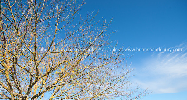 Leafless against blue sky.