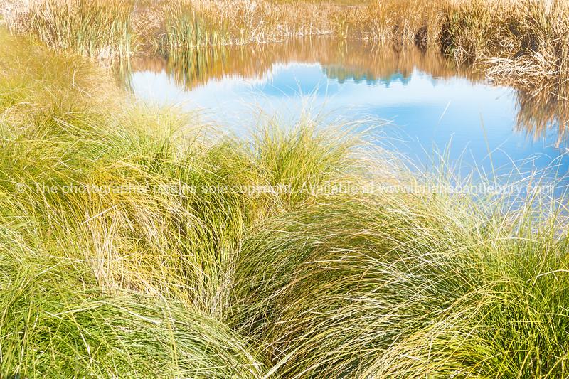 Pekapeka Wetlands, Hawke's Bay, NZ