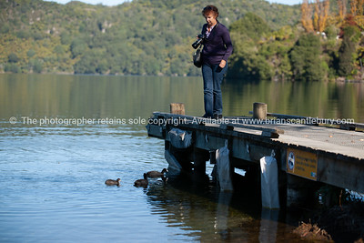 Tourist observes coots in water below jetty.