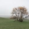 Ruralwinter landscape with leafless tree