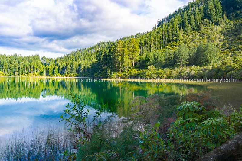 View across calm Blue Lake to ferns and trees on other side.