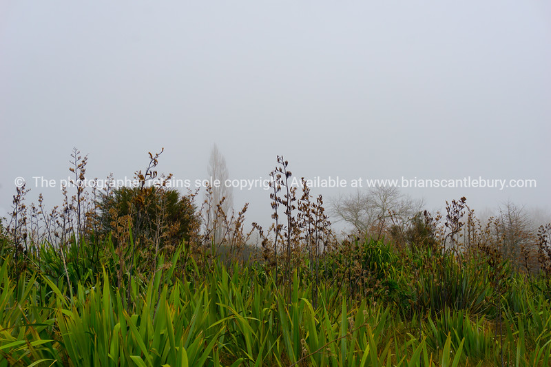 Swampland on edge of Lake Okareka with leafless trees though mist