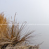 Misty background to dry bulrushes and reeds on edge of lake
