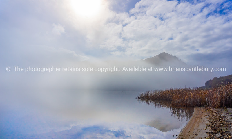 Raupo growing out into calm lake as morning mist and cloud lift