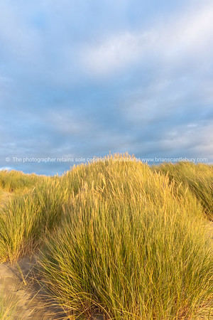 Waitere Beach Levin New Zealand