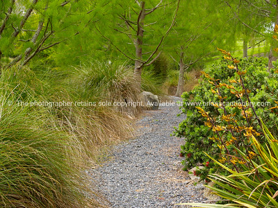 Lush garden path. New Zealand images.