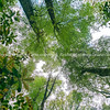 Forest canopy above