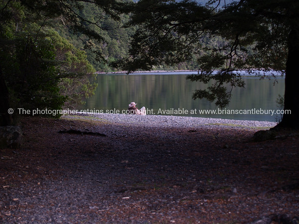 Resting by the lake. Lake Rotoiti in Nelson Lakes National Park.