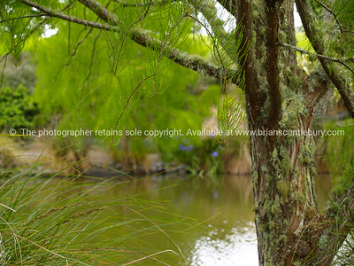 Garden ponds. New Zealand images.
