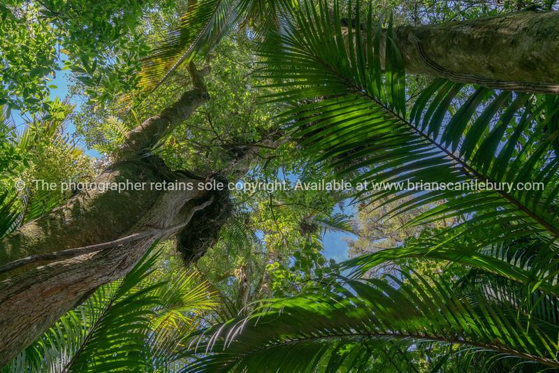 The Grove native bush walk near Pohara South Island
