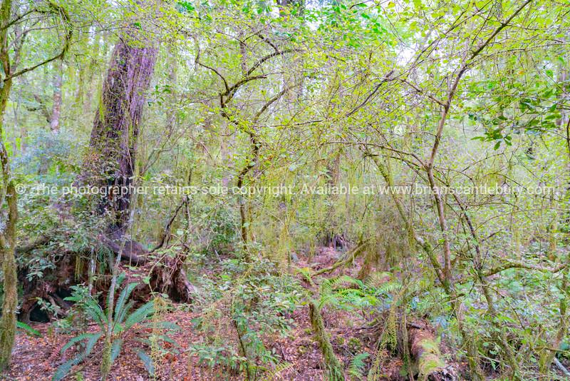 New Zealand native bush
