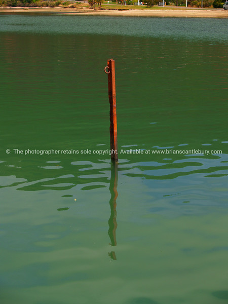 Stake in the harbour, Kenepuru Sound. New Zealand images.
