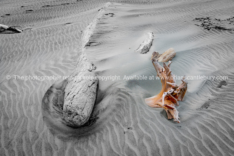 Old logs washed up on windswept beach