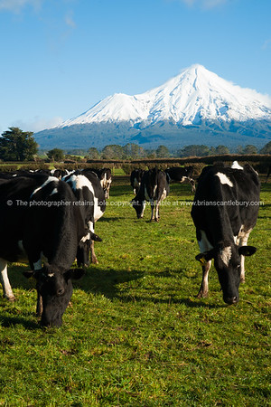Taranaki, New Plymouth Photo library.