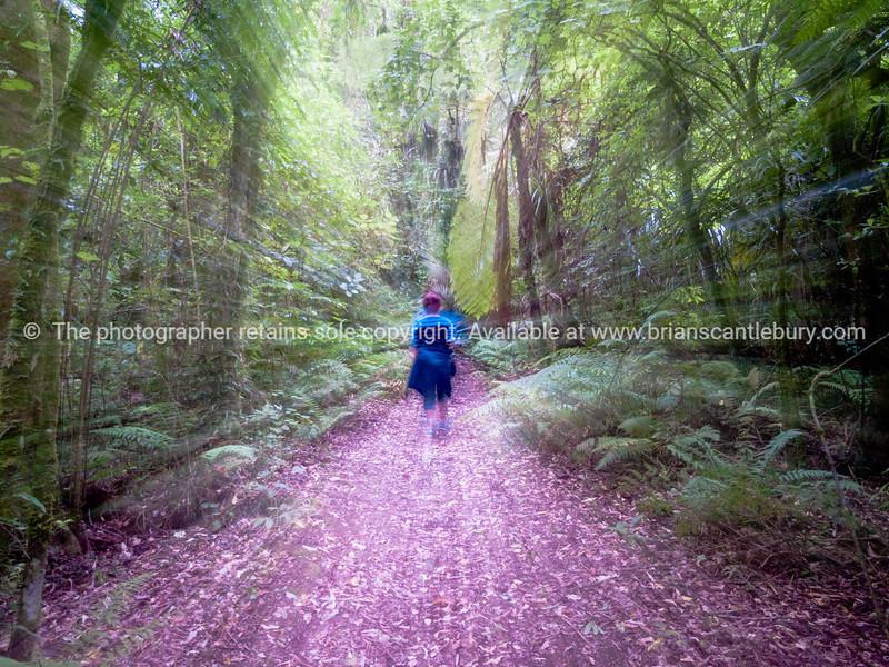 Conceptual image of tramper walking into New Zealand bush