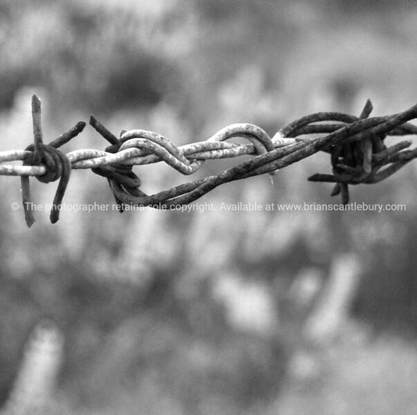 Black and white barbed wire.