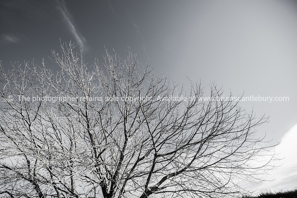 Deciduous tree.