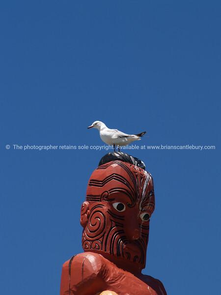 Seagull perches atop Maori totem pole or pou.