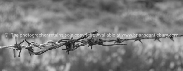 Barbed. Farm fence wire. New Zealand Image.