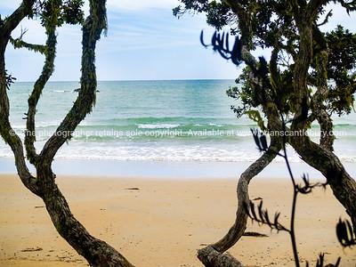 Northland. Ocean beach, white sand through pohutukawa trees.