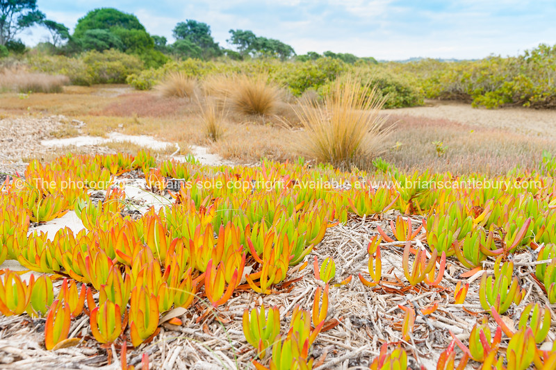Estuarine edge vegetation