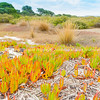 Estuarine edge vegetation