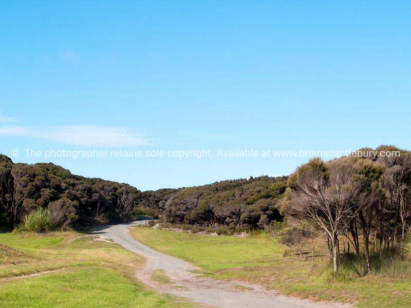 Ti tree lined track ti Karikari beach. Northland