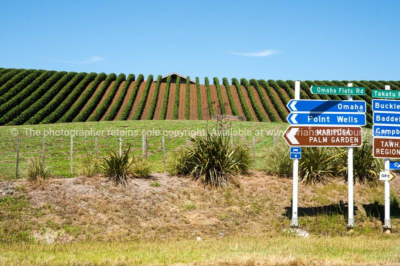 Matakana Vineyards