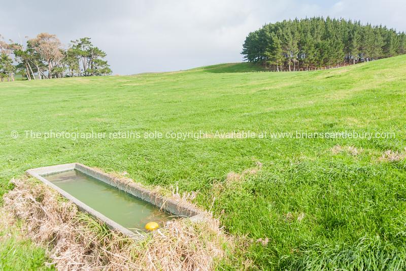 Farmland and trough Te Kopuru Northland