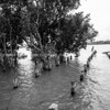 Kohukohu harbour, old jetty piles and mangroves in black and white.