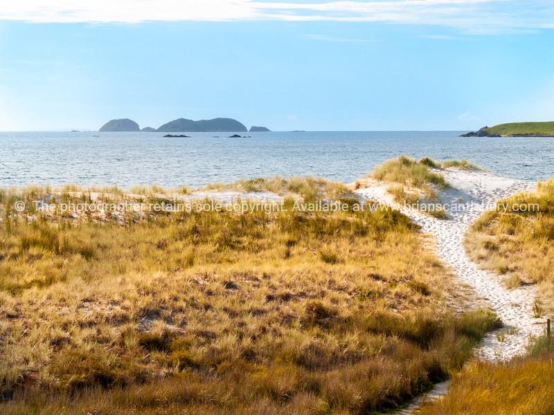 Tracks through the dunes to Karikari Beach. Northland