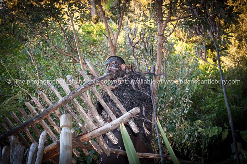 Maori warrior. Tamaki Maori Village.