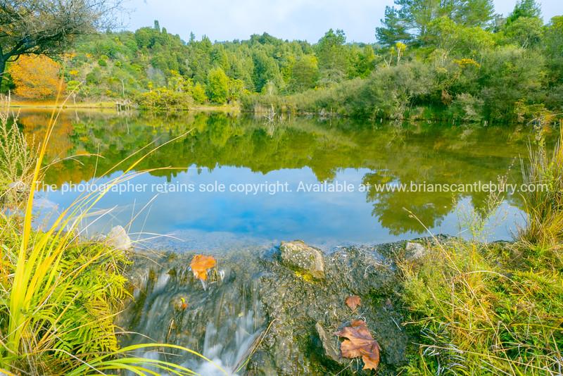 Lake surrounded by native bush