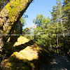 Track through South Island podocarp forest.