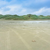 Windswept Oreti Beach on South Island's southern coast at Invercargill
