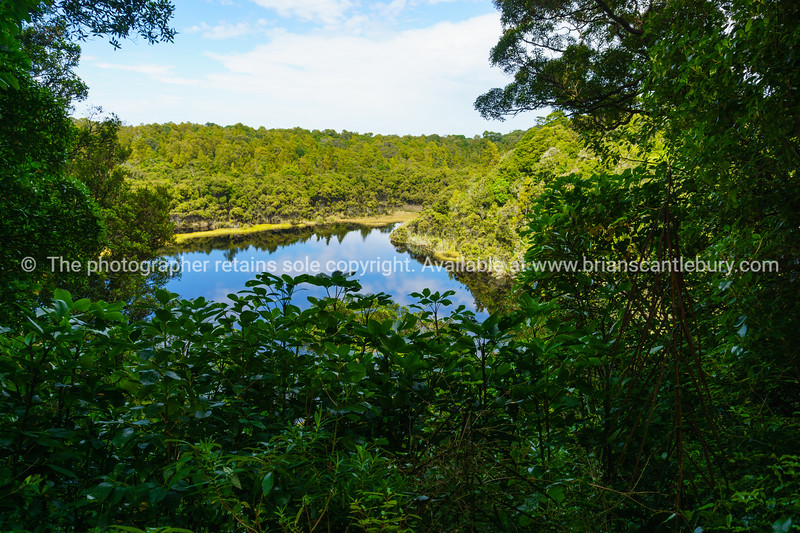 Dense surrounding forest reflected in small calm Lake Wilkie