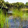 Aquatic vegetation in Lake Wilkie
