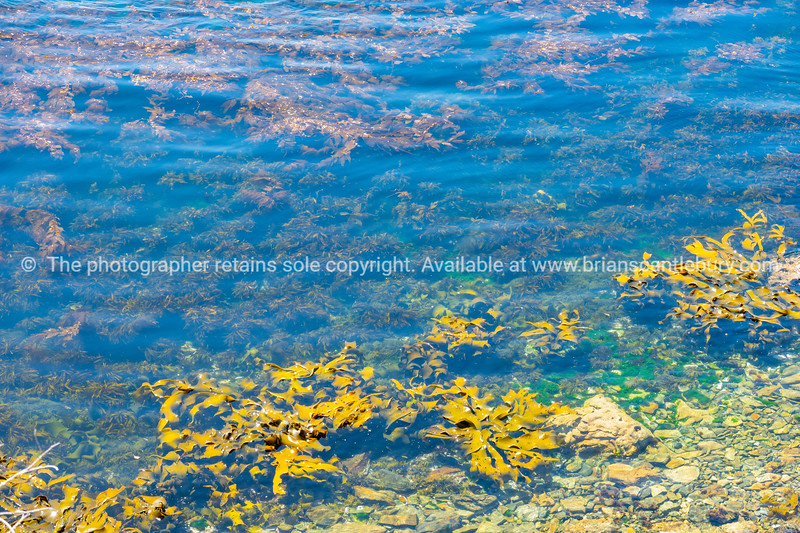 Coastal water with swirling seaweed and giant yellow kelp