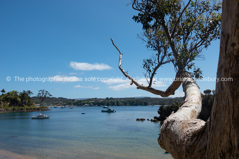 View out across Half Moon Bay through eucalyptus tree along roadside