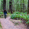 In New Zealand rain forest